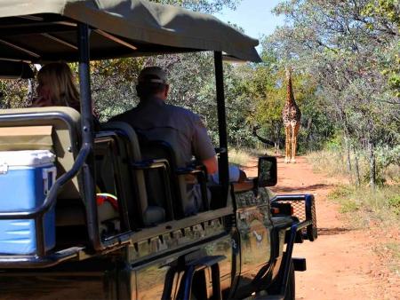 Safari, brunch au champagne et randonnée