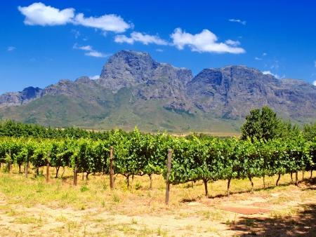 Découverte de la route des vins