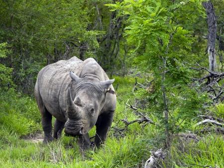 Safaris dans le parc Kruger