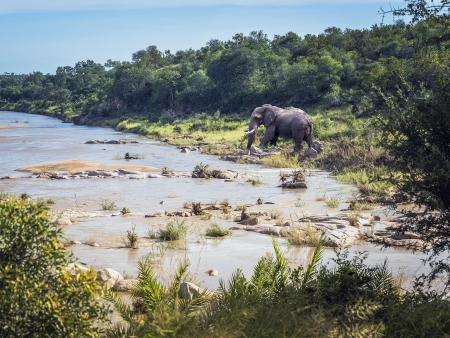 Le Parc Kruger : immense espace de jeu pour 850 espèces animales !