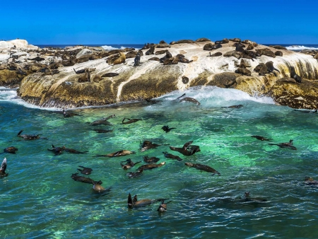 A la conquête du Cap de Bonne Espérance