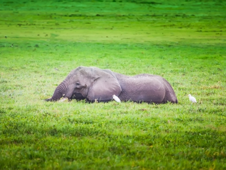 Nord du Swaziland et safari au parc Kruger