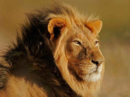 Safari guidé et ville des chercheurs d'or