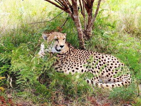 Artisanat et paysages du Swaziland