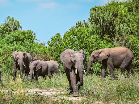 Journée de safari au Parc Kruger