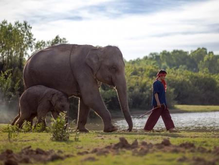 Rencontre avec les éléphants