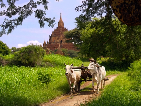 Dans la jungle de Mandalay à Bagan