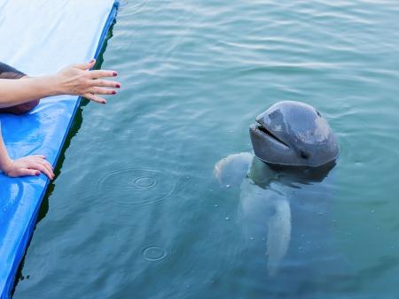 Observer les dauphins de l'Irrawaddy