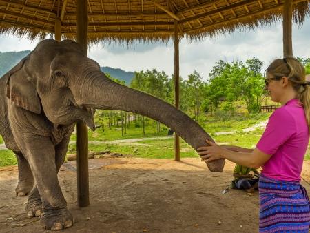Forêt tropicale et éléphants de Kalaw