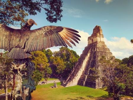 Tikal et Yaxha : géants Mayas