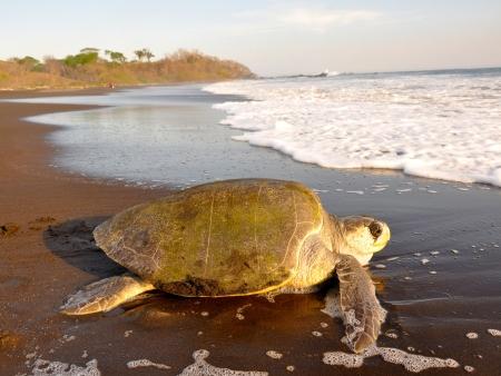 Isla Tortuga et Montezuma