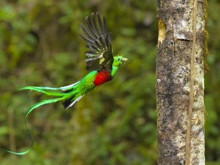 Le pays du quetzal