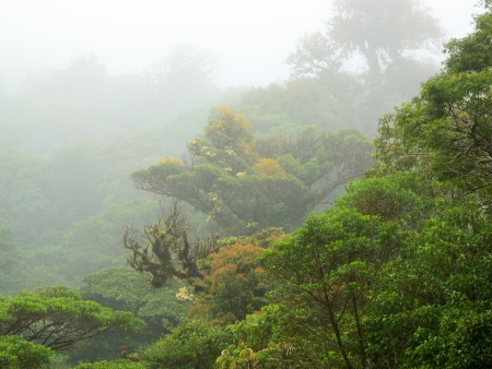 Mystique forêt nuageuse