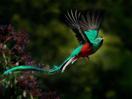 Splendeurs naturelles du Guatemala