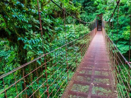 Monteverde, forêt primaire dans les nuages