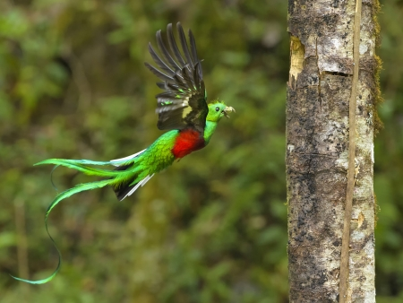 Biotopo del Quetzal