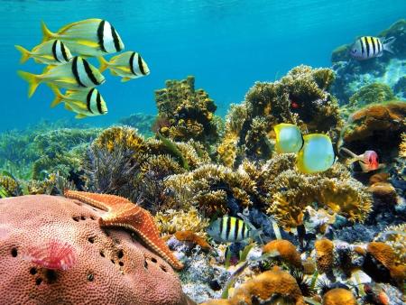 Snorkeling dans la mer des Caraïbes