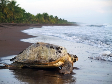 Au royaume des tortues
