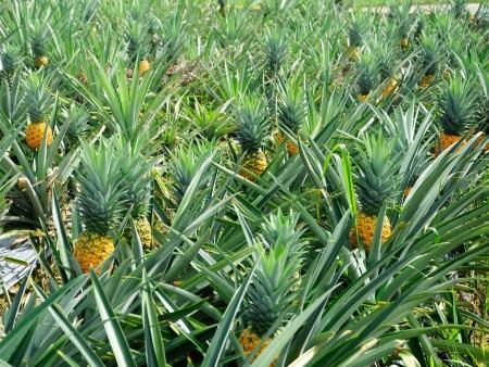 Terres de saveurs tropicales !