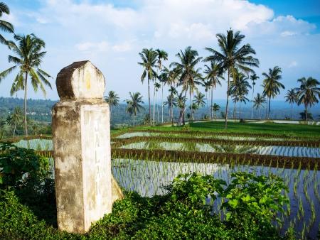 Paysages luxuriants du nord de Lombok