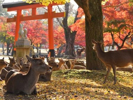 Parc National de Nara