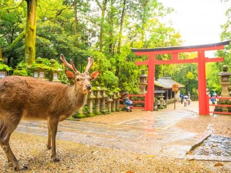 Le Bouddha de Nara et le thé d'Uji