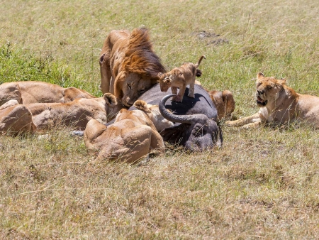 Superbe safari dans le Masai Mara