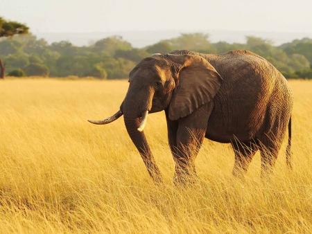 Amboseli, le paradis des éléphants !