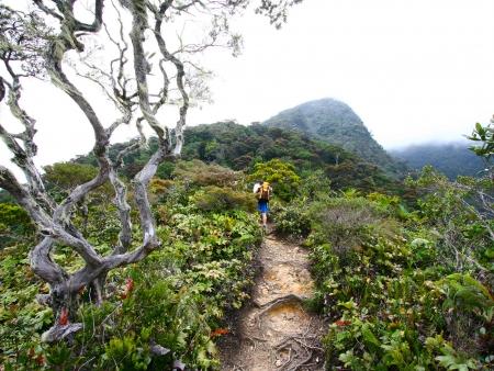 Sources chaudes et sentiers boisés du mont Kinabalu