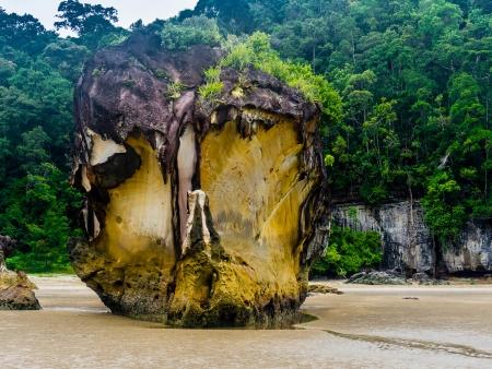 Vie sauvage sur la presqu'île de Bako
