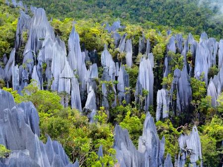 Pics de calcaires et forêt mystérieuse