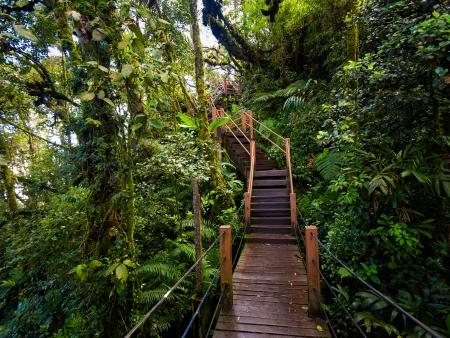 Forêt primaire et plantations maraîchères