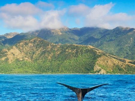 Le chant des baleines…