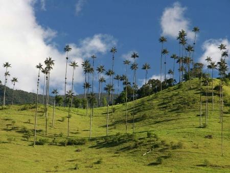 Visite de la Vallée de Cocora et du village de Salento