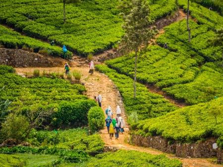 Trek : rizières, plantations de thé et cascades