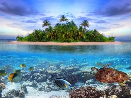 Envolez-vous vers les Maldives !