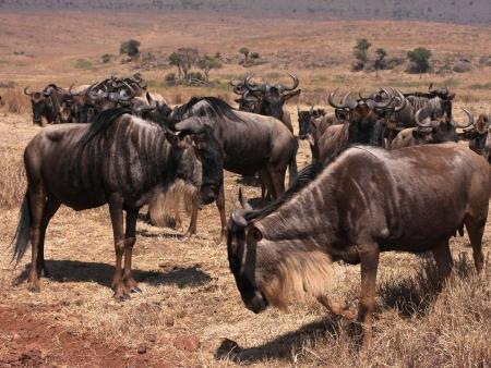 Cratère du Ngorongoro : merveille de la nature