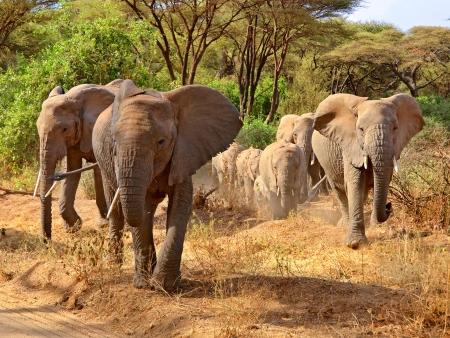 Parc National du Tarangire, safari aux pays des baobabs