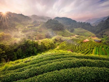 Plantations de Chiang Mai