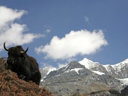 Monts Arts Bogd, montagnes sacrées des bouddhistes du pays - 80 à 100 km
