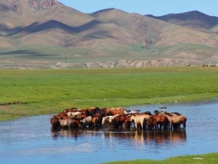 Les steppes au fil de l'eau