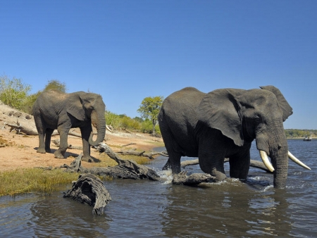 Découverte de la faune et la flore du Parc National de Chobe