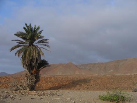 Au-delà de la Caldera, pérégrination au cœur d'une nature contrastée