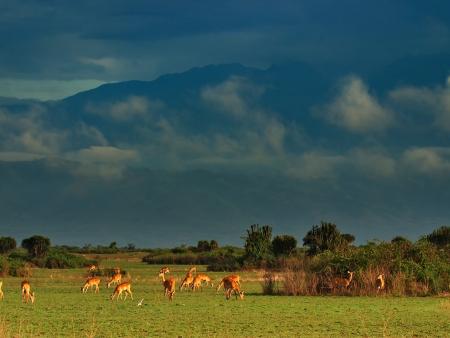 En route vers le parc national de Kibale