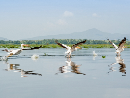 Le long des rives fleuries du Lac Naivasha