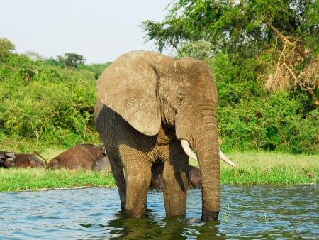Safari et découverte du parc