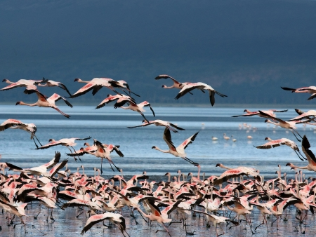 Le spectacle des flamants roses