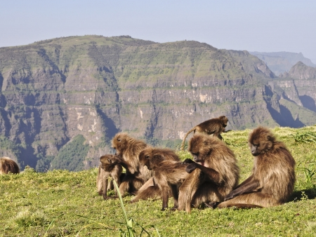 Route vers le Parc National du Simien