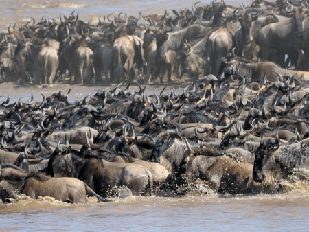 Seconde journée de safari dans le Masai Mara