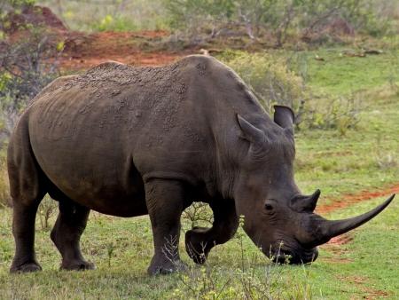 Le safari continue au cœur du Pilanesberg